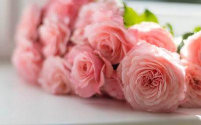 Virágvizek a szépség szolgálatában